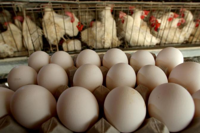 Salmonella Outbreak Linked To Eggs Grows