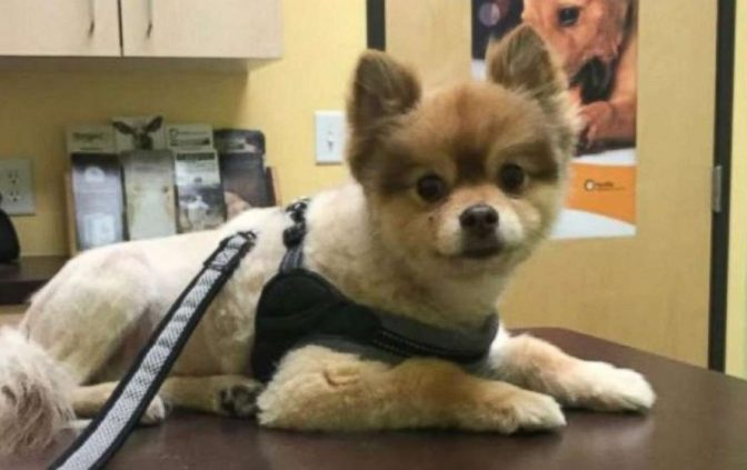 Dog En Route To Newark Dies In Crate