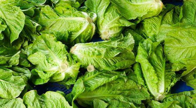 CDC Says Romaine Lettuce Is Not Safe To Eat
