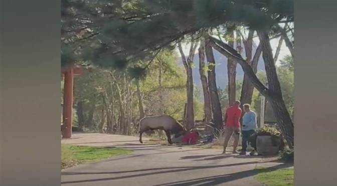 Park Visitors Attacked By Elk