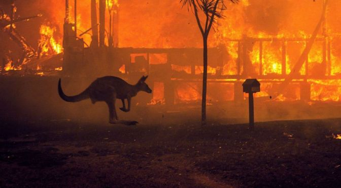 More Than 1 Billion Animals Estimated To Be Dead, At Least 24 People and 2000 Homes Destroyed In Australia Fires